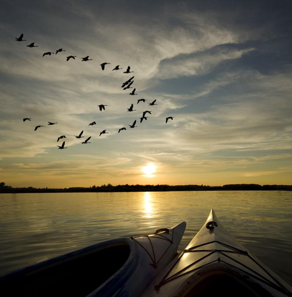Vögel im Sonnenuntergang am See