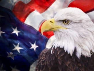 Weißkopfadler vor amerikanischer Flagge